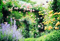 ガーデン紹介