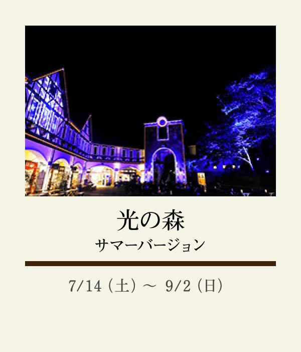 光の森 サマーバージョン:7/14(土)〜 9/2(日)