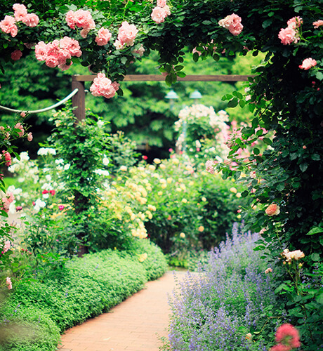 beautiful garden image