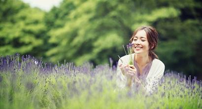 6.1-6.30 土日開催「ラベンダー摘み取り」癒しの香りに包まれよう
